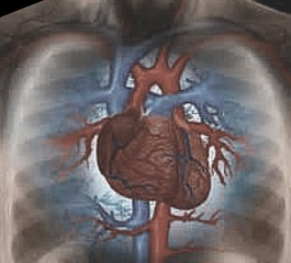 Vaping Improves Heart Health & Blood Pressure